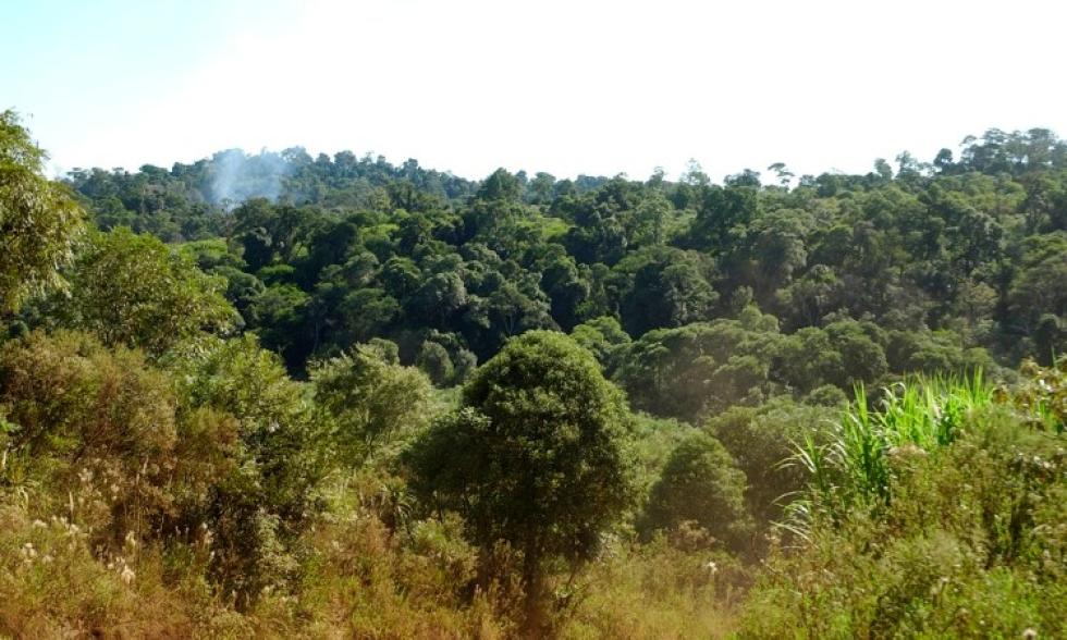 Foto-ArgentinaForestal-Reserva-Yaboti.jpg