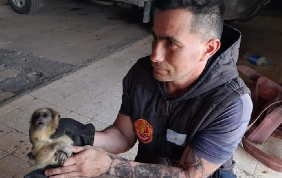 Rescatan a la cría de una mona que murió electrocutada